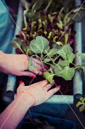 Frau bepflanzt Blumenkasten
