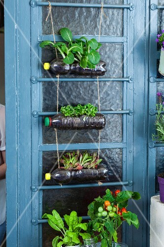 DIY: Plastikflaschen als dekorative Pflanzenhalter