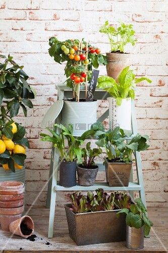 Potted vegetable plants on setpladder