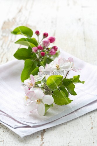Apple blossom on pink cloth on white wooden surface
