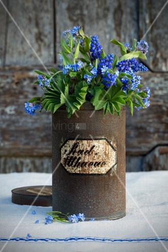 Forget-me-nots, grape hyacinths and lady's mantle in old, rusty apothecary jar