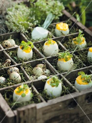 Stuffed eggs with truffle oil