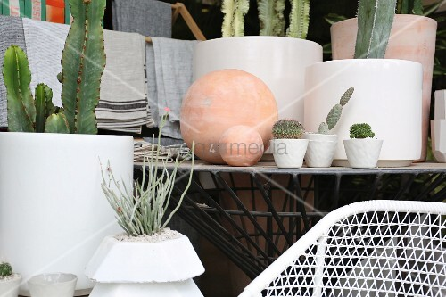 Succulents and cacti in various white containers