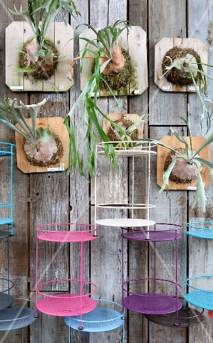 Staghorn ferns and colourful side tables mounted on board wall