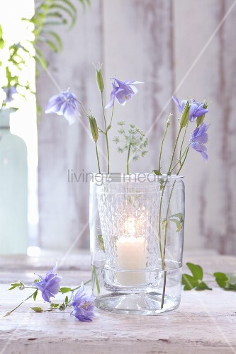 A lantern decorated with blue columbine flowers and pigweed