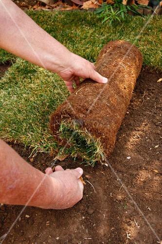 Laying turf in garden