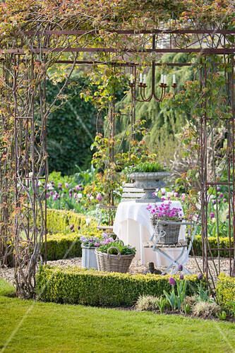 Romantic seating area below climber-covered pergola in spring garden