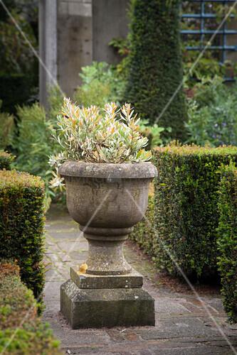Urn in topiary garden