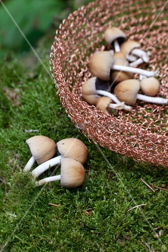 Crocheted copper wire basket of mushrooms on mossy ground