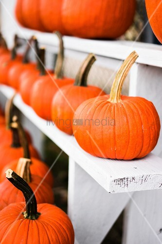 Orange pumpkins on a farm