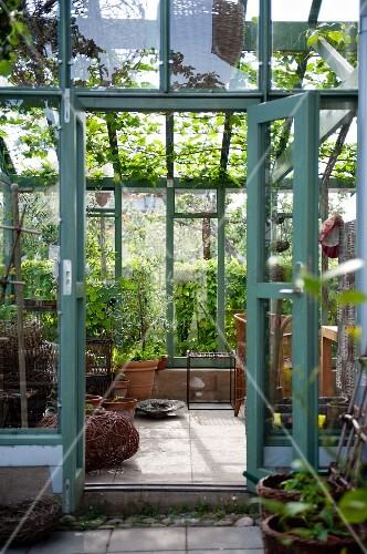 View into conservatory with vine growing on ceiling