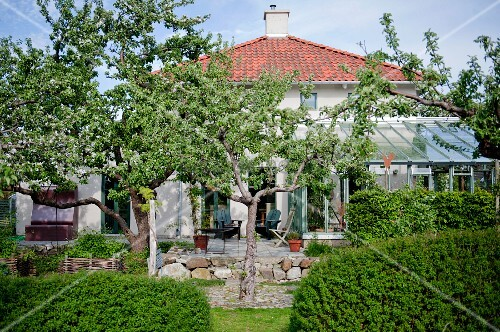 Garden with hedges, fruit trees, terrace and conservatory
