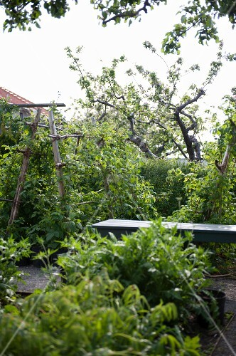 Path leading between fruit trees and dense planting in garden