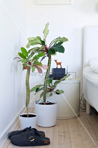 House plants in white pots between felt slippers and round bedside cabinet next to bed
