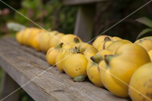 Row of quinces on wooden bench
