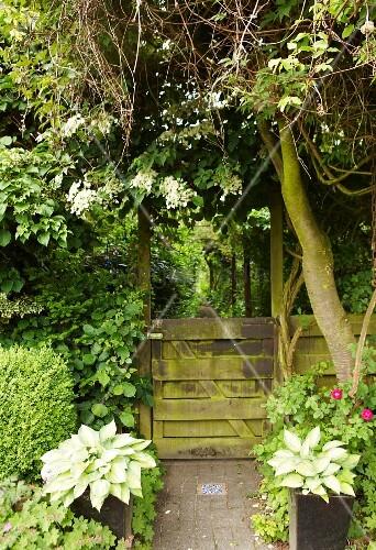 View through weathered garden gate into enchanting garden