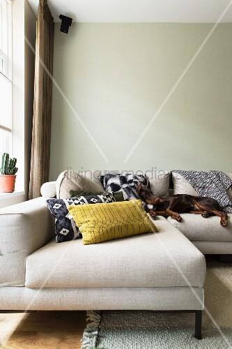 Hund liegt auf hellem Sofa vor blassgrüner Wand