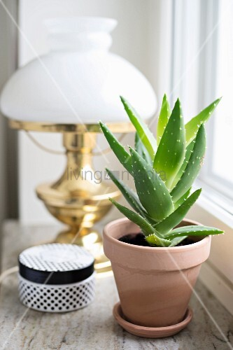Houseplant and black and white jewellery box in front of brass table lamp on windowsill
