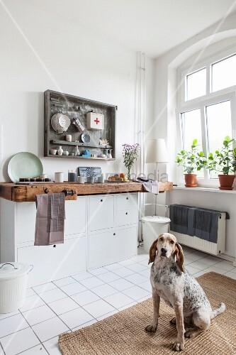 Relativ Hund sitzt in Altbau-Küche mit Werkbank … – Bild kaufen – 11507532 OE87