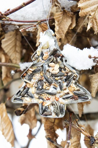 Christmas-tree pastry cutter filled with bird cake in garden