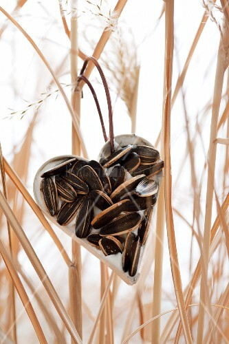 Heart-shaped pastry cutter filled with fat and sunflower seeds in wintry garden