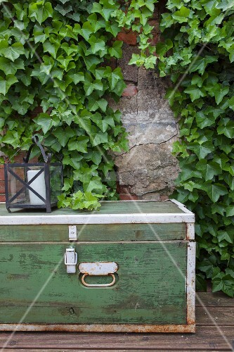 Old trunk and lantern in front of ivy-covered wall
