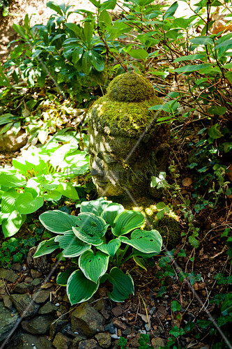 Moss-covered head of Buddha amongst ground-cover plants
