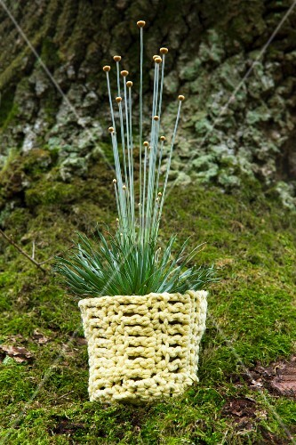 Ornamental grass in crocheted pot holder
