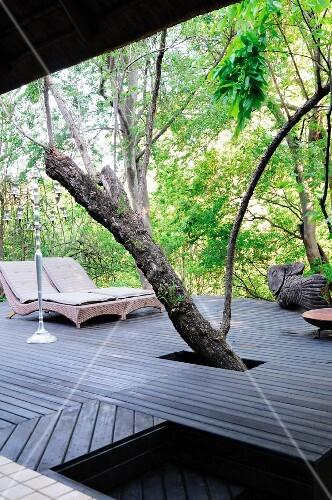 holzdeck um einen baum herum auf einer terrasse bild kaufen living4media. Black Bedroom Furniture Sets. Home Design Ideas