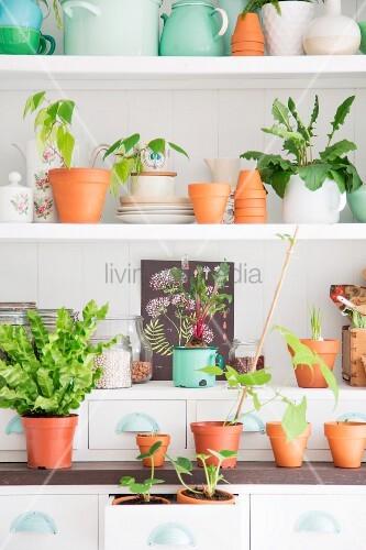 Weißes Regal mit Vintage-Geschirr, Vorratsgläsern, Tontöpfen und Grünpflanzen dekoriert