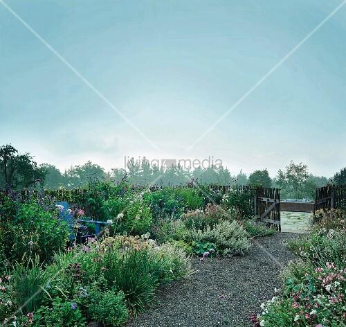 Early morning in a flower garden