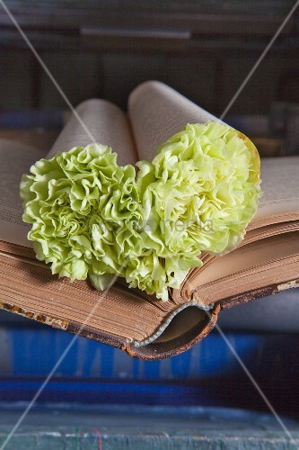 Love-heart made from book pages stuffed with green carnations