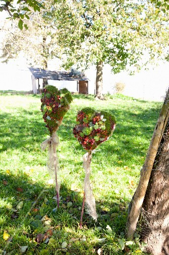 Moss hearts with fruits, honesty, heather and houseleeks in meadow