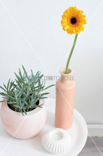 Gelbe Gerberablüte in apricotfarbener Vase und Grünpflanze auf weißem Besitelltisch