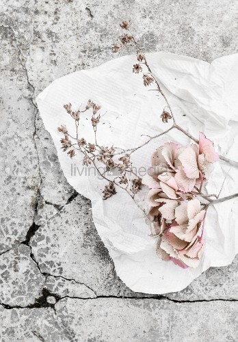 Pale hydrangea flowers on white kitchen roll on stone surface
