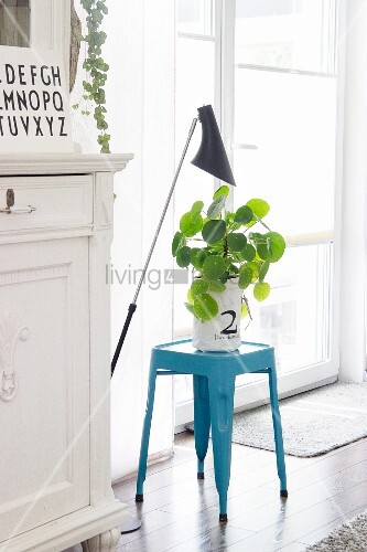 Decorative houseplant in white paper bag on light blue stool next to French windows