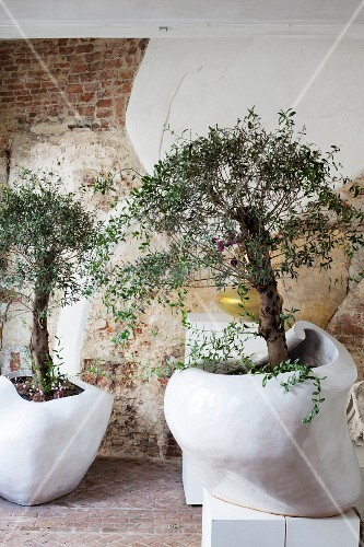 Two small trees in organically shaped white pots