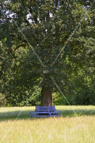 Blaue, halbrunde Bank um den Stamm eines Baumes in der Wiese