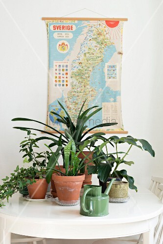 Potted house plants on white dining table in front of vintage map of Sweden