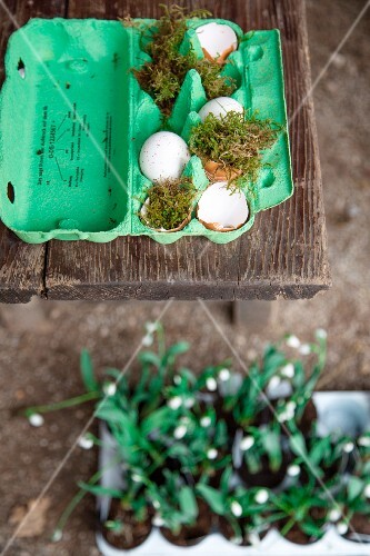 Easter arrangement of green egg box, moss and egg shells