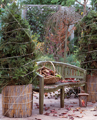 clematis und rosen im topf bild kaufen 12117488 living4media. Black Bedroom Furniture Sets. Home Design Ideas
