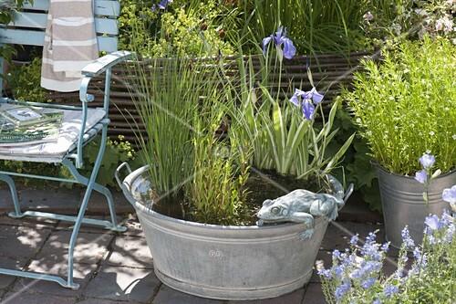 zinkwanne mit sumpfpflanzen als mini teich bild kaufen living4media. Black Bedroom Furniture Sets. Home Design Ideas