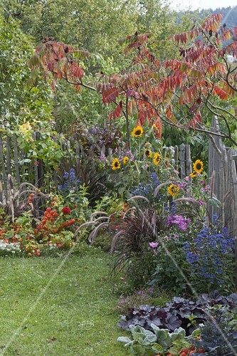 Small Autumn Garden With Perennials And Buy Image 12197652