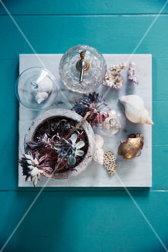 Succulents, pop bottle and sea shells on marble tile