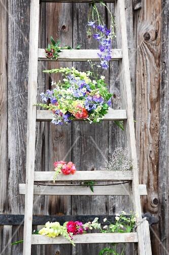 Cottage-garden flowers on wooden ladder