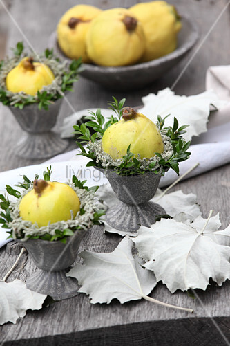 Autumn arrangement of quince, box and santolina sprigs in pewter vases