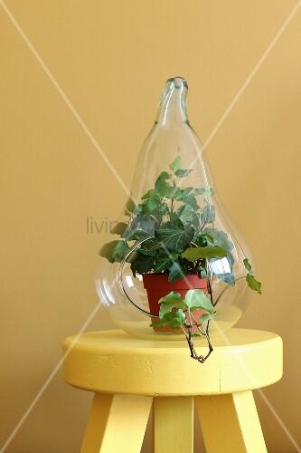 Birnenförmiges Glasgefäß mit Efeupflanze auf gelbem Hocker
