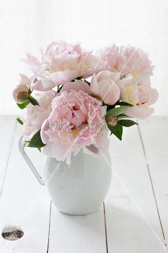 Jug of pink peonies