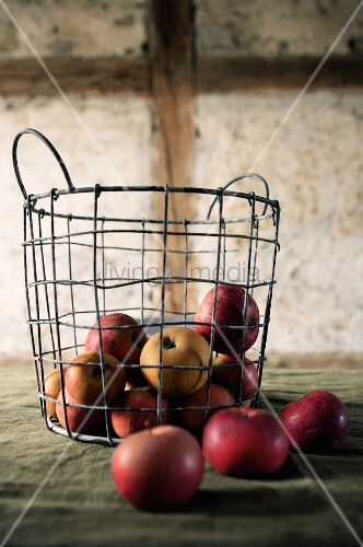 Red heritage apples in wire basket