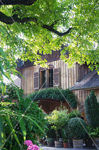 Blick durch Zweige und einen Baum auf eine Holzhaus mit Kübelpflanzen